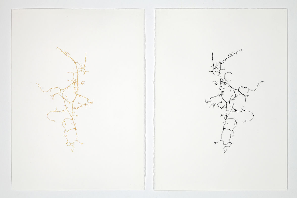 Léa Barbazanges - Drawings of a clementine-1