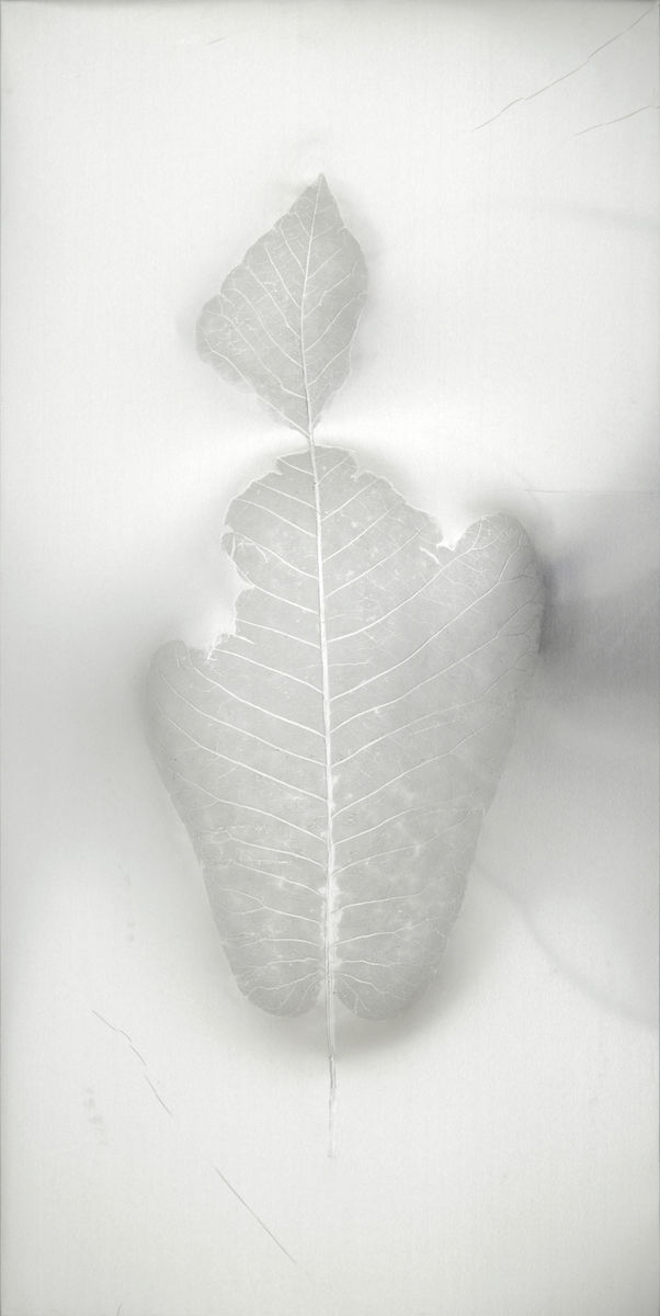 Léa Barbazanges - Magnolia macrophylla — masks, triptych-0